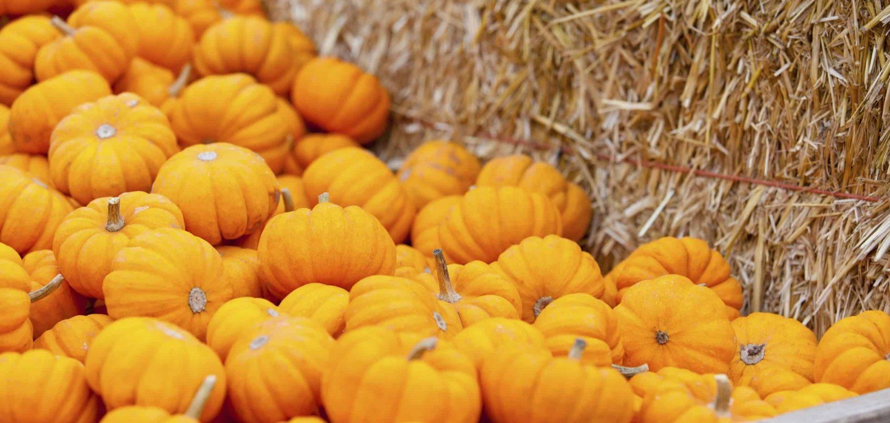 pumpkin dessert mask recipe