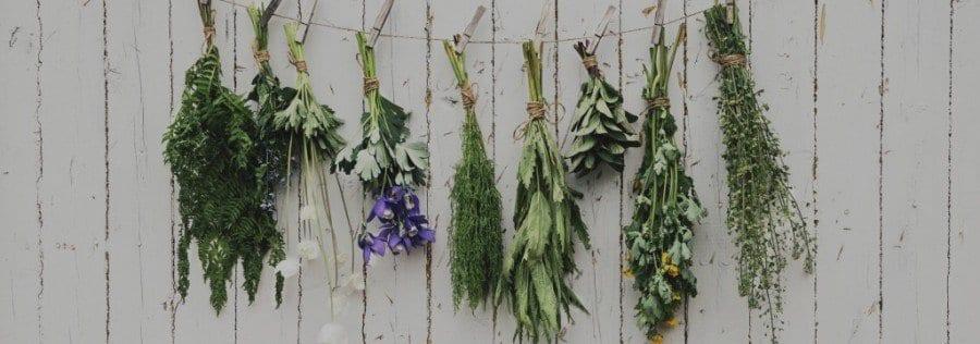 Medicinal-herbs2016